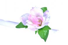 Kwiat na kierownicę róża biała różowy środek