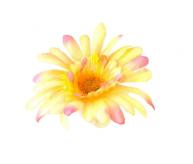 Kwiat na kierownicę dalia łososiowa