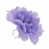 Kwiat na kierownicę peonia fioletowa Basil